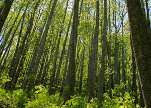 spring-woods