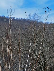 Dried stalks